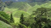 4D3N Taman Negara & Cameron Highlands Trip with Drop-off at Penang Island, Kuala Lumpur, Day Trips