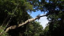 Full Day Tour Taman Negara bonus stops Batu Caves and Rainforest Waterfalls, Kuala Lumpur, Day Trips