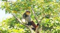 Half-Day Son Tra Wildlife Spotting Tour from Da Nang, Da Nang, Private Sightseeing Tours