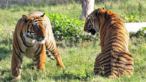 Private 2-Day-Tour to Ranthambhore Tiger Tour from Jaipur, Jaipur, Multi-day Tours