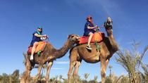 Small-Group Tour: Camel Ride through the Palm Grove of Marrakech, Marrakech, Half-day Tours