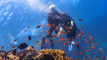 Red Sea Full-Day Introduction to Scuba Diving, Hurghada, Scuba Diving