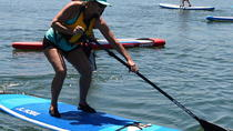 Port Adelaide Dolphin Sanctuary and Ships Graveyard Stand Up Paddle Board Tour, Adelaide, Stand Up ...