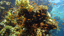 1 Day Snorkeling in Straits of Tiran, Sharm el Sheikh, Day Cruises