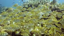 Snorkel Tour to Pelican Rock , Los Cabos, Snorkeling