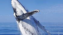 Whale Watching Combo in Cabo San Lucas: Sightseeing Cruise, Snorkeling and Shopping, Los Cabos, ...
