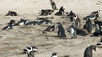 Private Full Day Tour: Whale Watching, Penguin Viewing and Wine Tasting from Cape Town