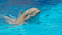 Dolphinarium in Alanya, Alanya, Family-friendly Shows