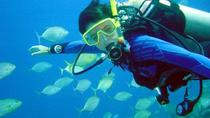 Scuba Diving for Beginners with Lunch, Fethiye