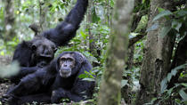 10 Days Classic Uganda Primate Tour and Community Work, Kampala, Hiking & Camping