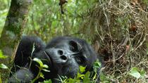 3-Day Rwanda Gorilla Safari, Kigali, Multi-day Tours