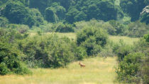 4 Days Murchison Falls Safaris, Kampala, Multi-day Cruises