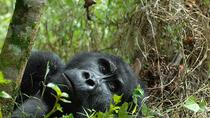 6 days Gorilla Adventure, Kampala, Multi-day Tours