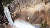 Private Full-Day Yellowstone Wildlife Safari Tour from Jackson Hole, Jackson Hole, Full-day Tours