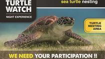 Turtle Watch, Playa del Carmen, Nature & Wildlife