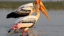 Chreav Bird Sanctuary Tour from Siem Reap, Siem Reap, Half-day Tours