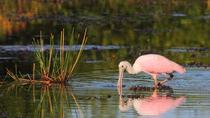 Prek Toal Bird Sanctuary Day Trip from Siem Reap, Siem Reap, Day Cruises