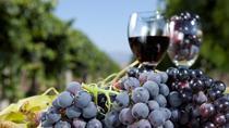 Douro Valley Wine Tour Full-day from Braga, Braga, Day Trips