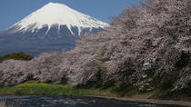7-Day Private Custom Tour of Tokyo, Mt. Fuji, Kyoto, and Osaka by Chartered Vehicle, Tokyo, Custom ...