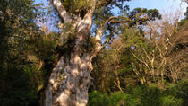 Full Day Jomon Sugi Trekking Tour in Yakushima island, Kagoshima, Hiking & Camping