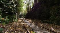 Full Day Jomon Sugi Trekking Tour in Yakushima island