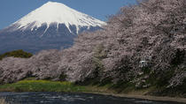 Private 7-Day Japan by Car: Tokyo, Mt. Fuji, Kyoto, Osaka, Tokyo, Custom Private Tours