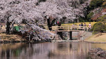 Private Custom Cherry Blossoms Tour by Chartered Vehicle, Tokyo, Walking Tours