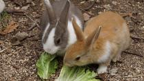 Rabbit Island Private Tour from Hiroshima with Local Guide, Hiroshima, Private Sightseeing Tours