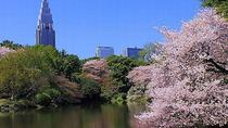 Tokyo: Cherry Blossom 'Sakura' Viewing Tour by Bus including Buffet Lunch, Tokio