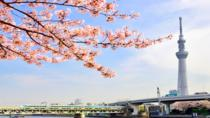 Tokyo: Cherry Blossom 'Sakura' Viewing Tour by Bus including Lunch, Tokyo, Day Trips