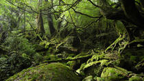 Trekking Tour of Shiratani-Unsuikyo, Kagoshima, Walking Tours