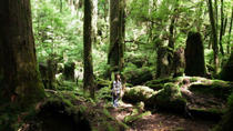 Walking Tour on Yakushima Island, Kagoshima, Walking Tours
