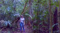 Lacandon Jungle 3-Day Adventure Tour Including Agua Azul and Bonampak, San Cristóbal de las...