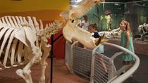 Skeletons: Animals Unveiled Museum Admission , Orlando, Museum Tickets & Passes