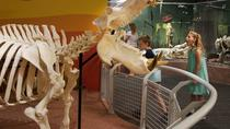 Skeletons: Museum of Osteology, Orlando, null