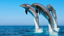 Swim with Dolphins in Hurghada, Hurghada