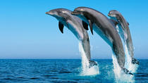 Swim with Wild Dolphins in Hurghada, Hurghada