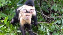 Palo Verde National Park Riverboat Cruise from Tamarindo, Tamarindo, Nature & Wildlife