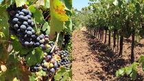 Private Wine Tasting Tour of Santa Ynez Valley, Santa Barbara, Wine Tasting & Winery Tours