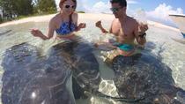 Combo Stingray Feeding and Multi-Reef Snorkel Tour, Freeport, Snorkeling