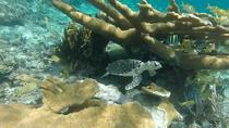 Stingray Snorkel Eco-Tour at Sandy Cay
