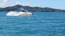 Morning or Afternoon Whitsundays Whale Watching Cruise from Airlie Beach Including Snorkeling, ...