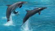 Dolphin Watch (2hours) :Muscat Tours, Muscat, Dolphin & Whale Watching