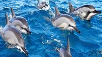 Dolphin watching and Snorkeling Combined tour from Muscat, Muscat, Day Cruises
