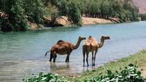 East Jewels with Wadi Darbat :Salalah tours, Oman, Day Trips
