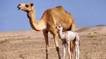 Wahiba Sands and Wadi Bani Khalid 4WD Desert Safari, Muscat, 4WD, ATV & Off-Road Tours
