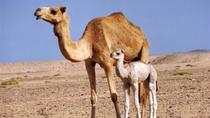 Wahiba Sands&Wadi Bani Khalid desert Safari(Muscat tours), Muscat, 4WD, ATV & Off-Road Tours