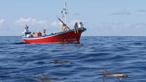 Whale and Dolphin Watching in Canary Islands, La Gomera, Nature & Wildlife