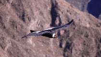 2-Day Colca Canyon and Condor Tour from Arequipa, Peru, Arequipa, Cultural Tours