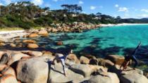 4-Day Tasmania East Coast Adventure from Launceston to Hobart Including Bay of Fires, Wineglass...